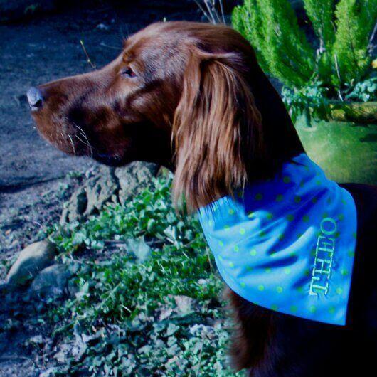 Hundehalstuch Blau mit kiwigrünen Punkten