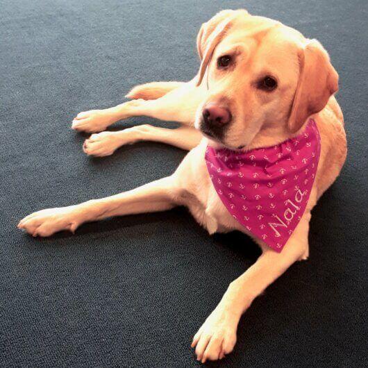 froehliches pink fuer hundemaedchen nur noch eins pink mit anker tuch mit tunnel 606a4ee3