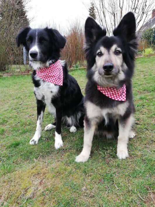 Hundehalstuch Klassiker: Vichykaro rot-weiß